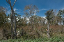 dry Yucatan forests