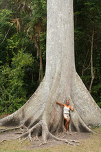 Small Dasa and great ceiba