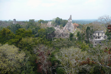 Tikal hidden in Peten jungle