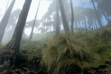 Cloudy forest on the Volcan Santa Maria