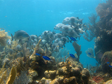 Underwater world by Dasa, Utila