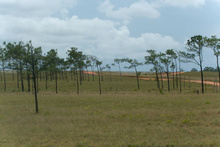 Savanas of La Mosquitia